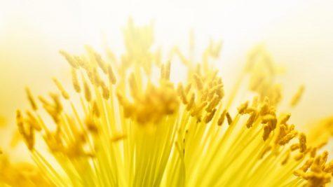 Pollen, an Unexpected Bright Spot This Spring